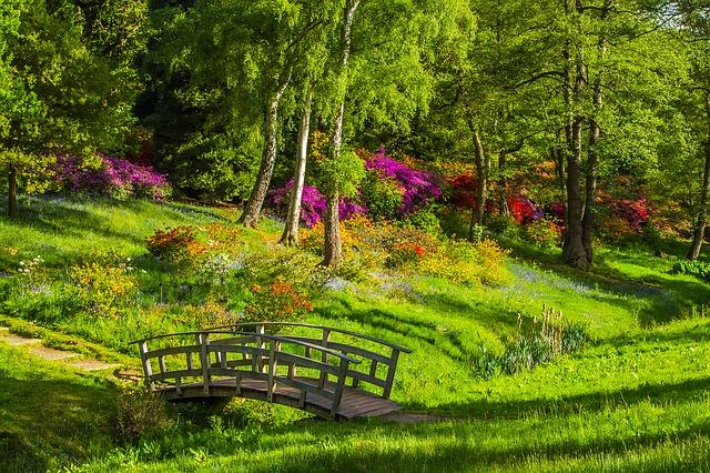 nowy park w drwini